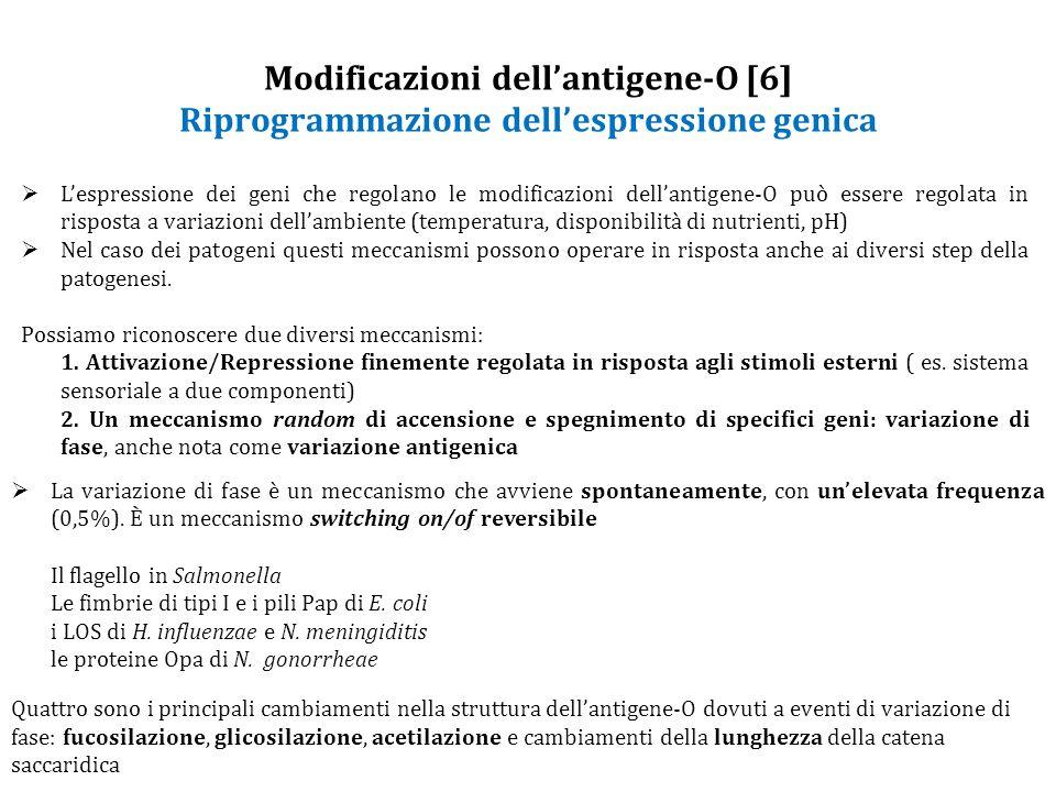 Modificazioni dell'antigene-O [6] Riprogrammazione dell'espressione genica